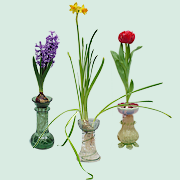 Teh Curious History of the Bulb Vase